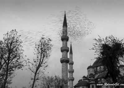 Bando de pájaros en Estambul